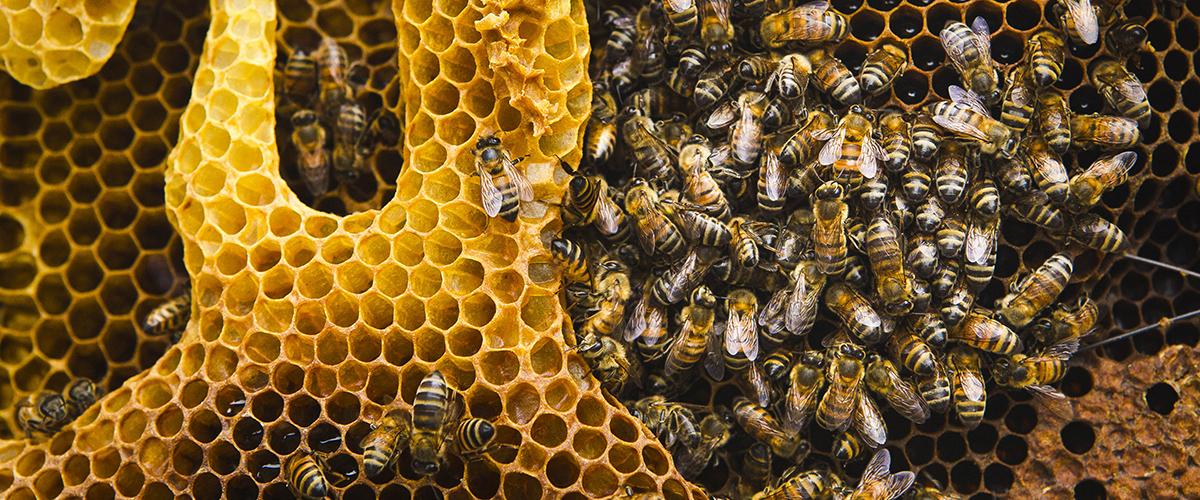 Державна служба України з питань безпечності харчових продуктів та захисту прав споживачів про бджільництво...